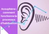 Quand l'habituation permet au cerveau de mieux filtrer des sons.